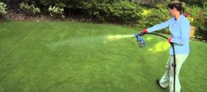 10 Best Weed Killer For Lawns: Reviews And Tips For A Better Lawn