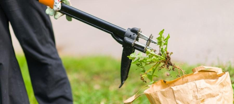 Best weeding tool