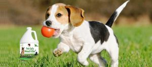 Pet-Friendly Weed Killers: Keep Your Pet And Garden Safe!
