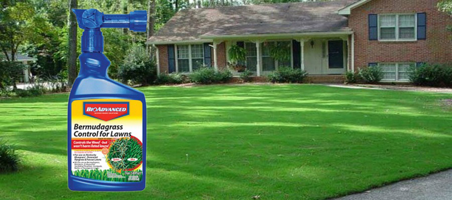 Best Weed Killer for Bermuda Grass