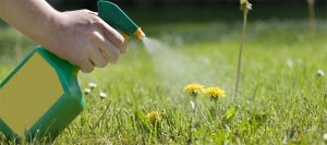 The Best Dandelion Killer: 7 Brands To Use On Your Lawn