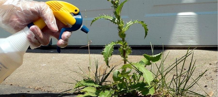 Does Bleach Kill Weeds