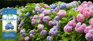 Best Fertilizer For Hydrangeas: 6 Products For A Picture-Worthy Garden