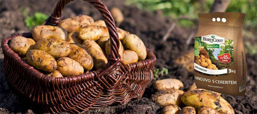 Best Fertilizer for Potatoes